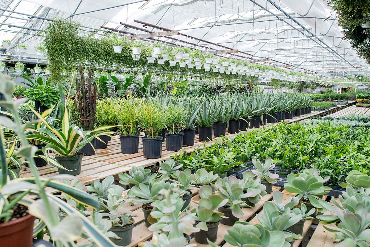 plant sourcing for planting plan