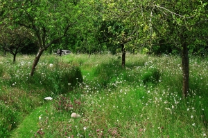 A Contemporary Woodland Wildflower Meadow